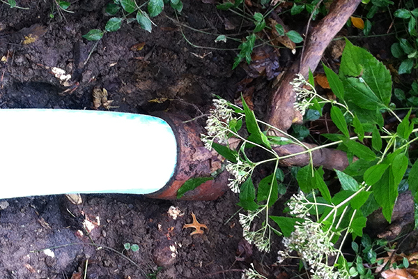 Tree Root Invasion